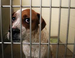 dog_cage
