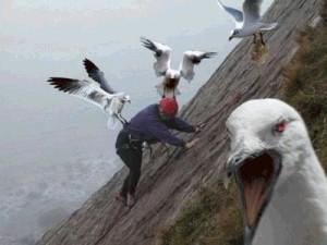 Oiseaux de mauvaise augure annonçant la mort du Tour de France